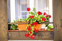Window with pretty flower arrangement.