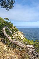 Landscape on Pointe du Layet, Le Lavandou, Var, Provence-Alpes-Cote d`Azur, France, Europe.