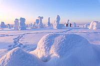 Hikers in the snowy forest, Riisitunturi National Park, Posio, Lapland, Finland.