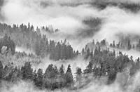 Fog, rain and clouds in forest on southeast side of Mount Saint Helens National Volcanic Monument, Cascade Mountains, Washington. From Forest Road 90 ...