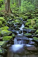 Cascading stream along Sol Duc Falls Trail; Olympic National Park, Washington. .