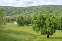 Prados, fields at springtime with cows, Cuerpo de Hombre river, Valdelageve, Salamanca, Castilla y Leon, Spain.