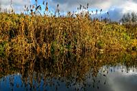 View on autumn landscape of river and grass in sunny day. Grass on river coast in autumn day. Reflection of autumn grass and sky in water. Autumn in L...