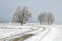 winding road in winter partly covered with snow in flat countryside, Bavaria, Germany