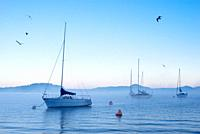 Sailboats at dawn on Lake Maggiore in winter seagulls fly.