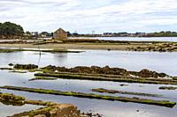 Views of the oyster and mollusc farming areas in Île du Saint-Cado, Brittany, France.
