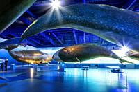Whale Museum, Reykjavik, Iceland.
