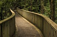 Walkway in the forest of the Whangarei Scenic Reserve; Tikipunga; North Island; New Zealand;.