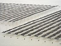China Xiapu Seaweed Farm.