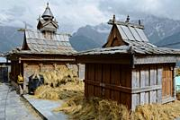 Hindu Temple in the small village of Kalpa, with wheat drying in the sun.