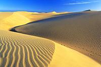 Maspalomas sandy dunes, Gran Canaria, Canary Islands, Spain.