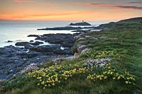Spring flowers provide the foreground interest in this image, which features Godrevy Lighthouse in St Ives Bay, on the North coast of Cornwall. It was...