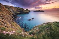 Sea thrift on the cliff top above Mullion Cove on Cornwall's Lizard Peninsula, captured at sunset in late April with Mullion Island in the distance.