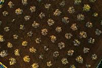 Aerial photo of almond blossoms, Spain, Balearic Islands, Mallorca, Llucmajor.