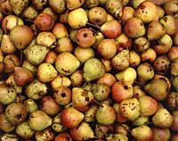 Wild pears