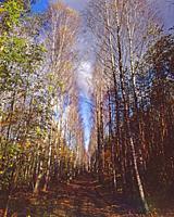 Autumn road in wood. Poland.
