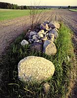 Spring field. Poland.