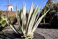 The cactus garden project of César Manrique. Guatiza, Lanzarote. Spagna.