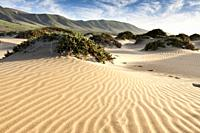 Features sand dunes of the bay. Famara, Lanzarote. Spain.