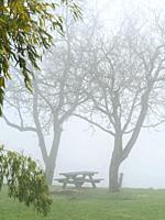 picnic table and bare trees in fog, Tourtres, Lot-et-Garonne Department, Nouvelle Aquitaine, France.