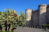 Castello Ursino and Indian fig opuntia, Catania, Sicily, Italy.