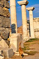 Turkey, Izmir province, Selcuk city, archaeological site of Ephesus, many cats leave on the site.