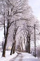alley of trees in winter. Augsburg area, Bavaria, Germany