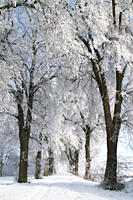 winter alley, alley, trees, covered with snow, Augsburg area, Bavaria, Germany