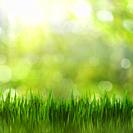 Summertime. Bright seasonal backgrounds with green grass and beauty bokeh.