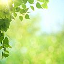 Summer morning. Abstract environmental backgrounds with green foliage and bokeh.