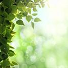 Morning dew. Seasonal backgrounds with clean dew on the foliage and bright sunlight.