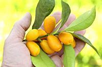 Kumquats.