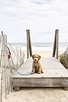 A puppy at the beach.