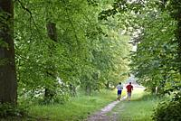 joggers on a path in the Park of the Chateau of Rambouillet, Forest of Rambouillet, Haute Vallee de Chevreuse Regional Natural Park, Yvelines departme...
