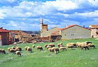 Flock of sheep and village. Sierra de Ayllon, Segovia province, Castilla Leon, Spain.