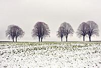 paysage de la Beauce en hiver, departement d'Eure-et-Loir, region Centre-Val de Loire, France, Europe/landscape of Beauce in winter, Eure-et-Loir depa...