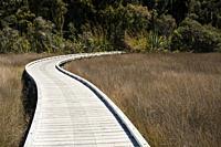 Walking path in Okarito, South Island, New Zealand.
