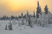 Landscape in winter season, sun behind clouds making the sky orange, nice colorful sky, Gällivare county, Swedish Lapland, Sweden.