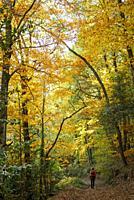 Autumn. Montseny natural park. Barcelona. Catalonia. Spain.