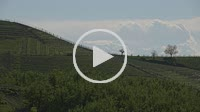 Timelapse view of the winding hills over the vineyards and clouds in the Langhe Piedmont, the sky is blue