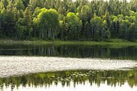 Canada, BC, Cranbrook. Wapiti Lake. A light breeze ripples the lake´s surface.