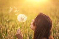 Beautiful young woman blows dandelion in a wheat field in the summer sunset. Beauty and summer concept.