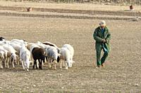 "Flock of ""Manchega"" sheep with shepherd. Sugel. Almansa. Albacete . Castile-La Mancha. Spain."
