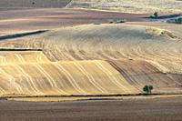 Cereal fields. La Hinojosa. La Mancha. Cuenca
