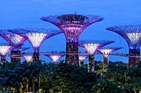 Supertree Grove At The Gardens By The Bay Nature Park, Singapore, South East Asia.