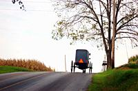 An Amish buggy makes its way over a hill.
