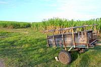 Sugar cane vintage carriage, Grande-Terre, Guadeloupe, Caribbean islands, France.