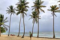 Beach with coconut trees , Grande-Terre, Guadeloupe, Caribbean islands, France.