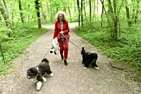 senior woman (67 years old) walking with two dogs on leash in forest, in Nymphenburg, Munich, Germany.