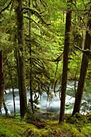 McKenzie Wild and Scenic River from McKenzie River National Recreation Trail, McKenzie Pass-Santiam Pass National Scenic Byway, Willamette National Fo...